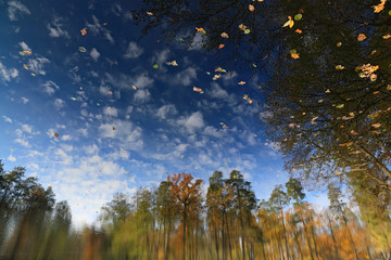 Autumn landscape on the surface of water. Reflected autumn landscape in the water which was being flipped upside down.