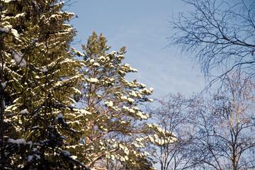 зимний пейзаж смешанный лес на фоне неба