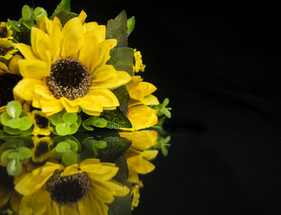 Bunch of sunflowers with reflection isolated on white.
