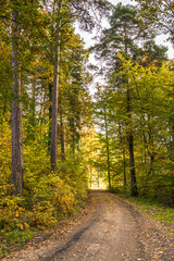 Polish trail in the forest in autumn, landscape of road in scenic nature at fall and colorful trees