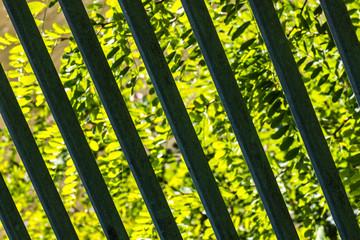 Grünlandschaft hinter Gittern