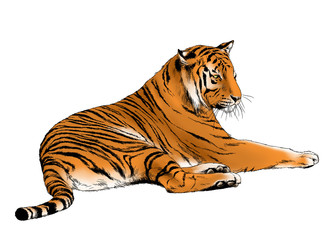 big tiger painted with ink by hand on a white background color logo predator
