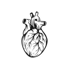 Heart vector illustration. Hand drawn sketch
