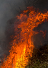 Flames Power during a Forest Fire.