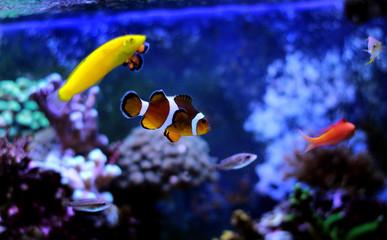 Popular fish enjoy in coral reef aquarium tank