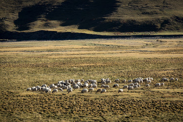 Mountain landscape with grazing sheep