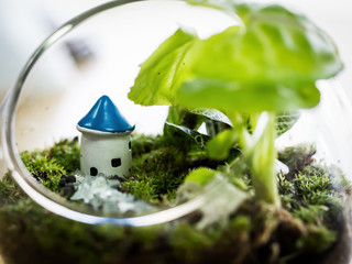 The little world of house, terrarium plant decoration