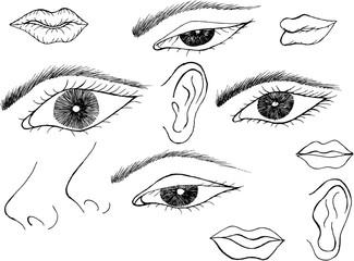 five sense, sketch