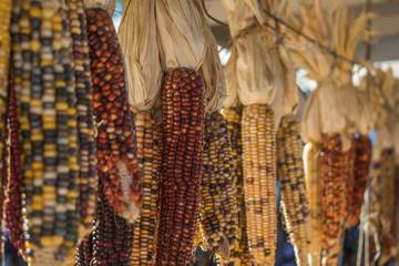 Sweet corn varieties