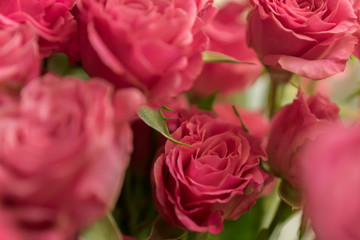 bunch of pink roses background, soft focus