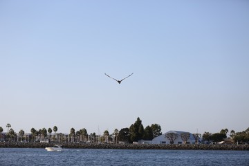 Sea Gull in Flight San Diego Coast Line