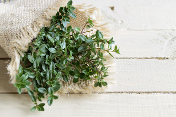 Creeping thyme lemon on a wooden table.