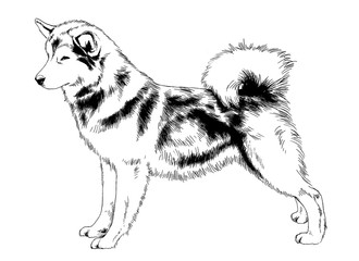 great guard dog drawn with ink on white background logo tattoo