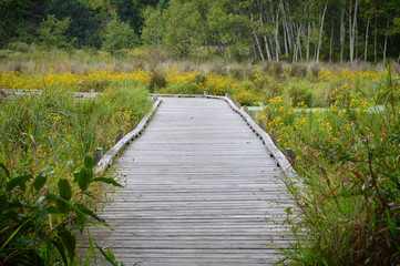 Wall Murals Road in forest Boardwalk in the wetland
