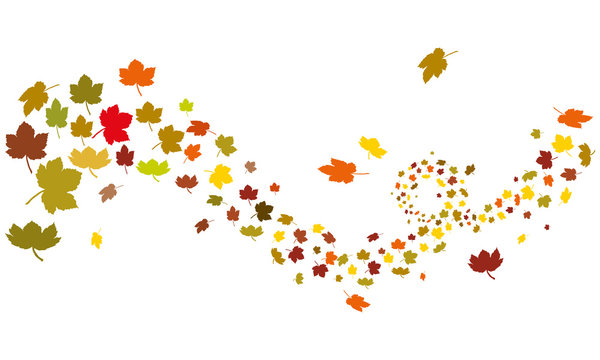 Maple leafs silhouette autumn wind