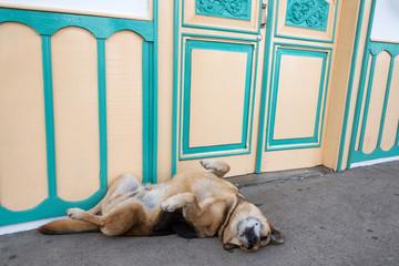 Fototapete - Dog on a Sidewalk