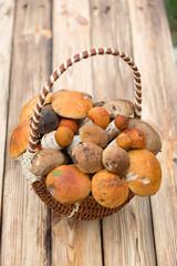 Orange hat boletus mushrooms in a basket
