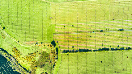 Aerial view on a vineyard on hills near New Plymouth. Taranaki region, New Zealand