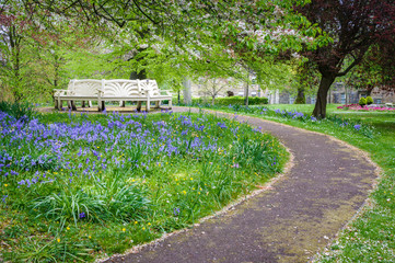 Bench surrounded by bluebells