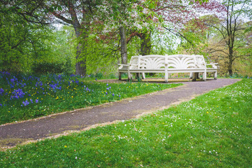 White bench and bluebells