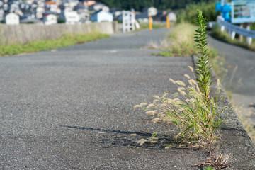 petite végétation sauvage au bord du chemin bitumé