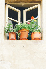 Plants growing in the window