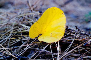 yellow Lonely leaf