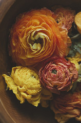 Fresh and dried Ranunculus flowers