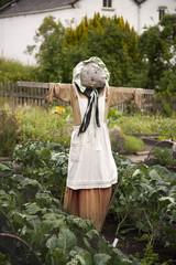 female scarecrow in a vegetable garden