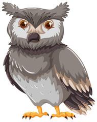 Gray owl on white background