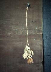 Dried rose hanging by a binder clip inside an old barn