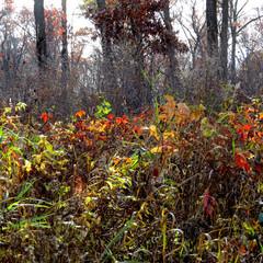 Fall Color Mix