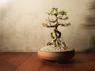 Photo sur Aluminium Bonsai Traditional japanese bonsai