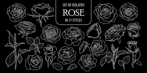 Set of isolated rose in 17 styles. Cute hand drawn flower vector illustration only white outline.