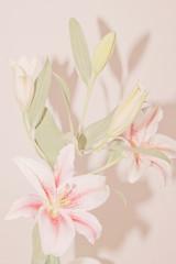 Lilium bouquet in soft pink