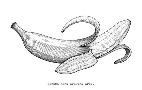 Banana hand drawing engraving style,Banana black and white clipart
