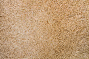 close up horse skin or fur concept for background