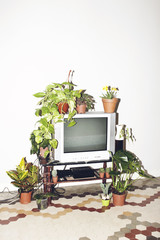 Television and plants