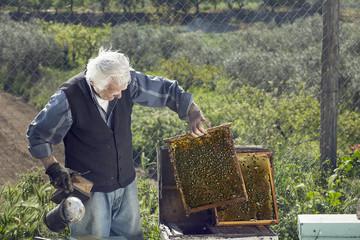 Senior beekeeper