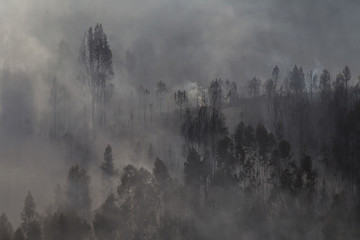 Forest Landscape After a Fire.