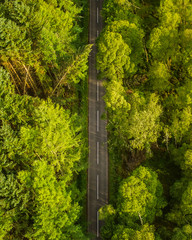 An aerial view of a small rural road bisecting a natural deciduous forest in Scotland.