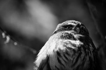 Suspicious owl