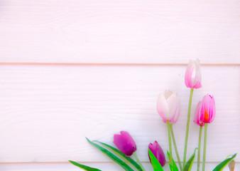 tulips on wood wall