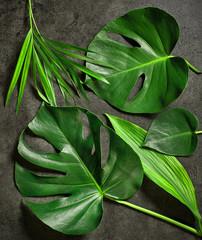 Wall Mural - various tropical leaves