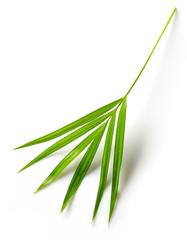 Wall Mural - leaf of Areca palm