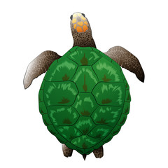 Big green realistic turtle vector illustration