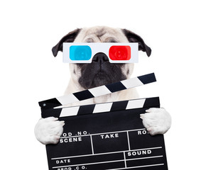 dog watching the  movies