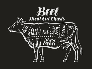 Meat cut charts. Cow, beef concept. Menu restaurant or butcher shop. Vector illustration