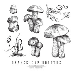Forest mushrooms orange-cap boletus with leaves and plants, seasonal vector sketch collection.