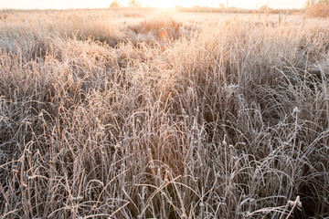 Hoarfrost on the grass, green and dry leaves. Natural backgrounds and textures.